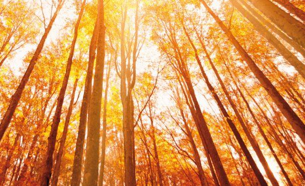 alberi-incas